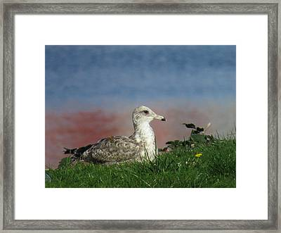 She Who Watches Framed Print