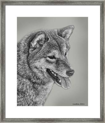 Sheba Inu  Framed Print by Larry Linton