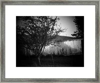 Shed  And Tree Framed Print by Michael L Kimble