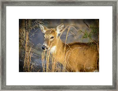 Shed.... Framed Print