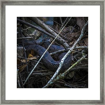 Shedding Time Framed Print by Marvin Spates