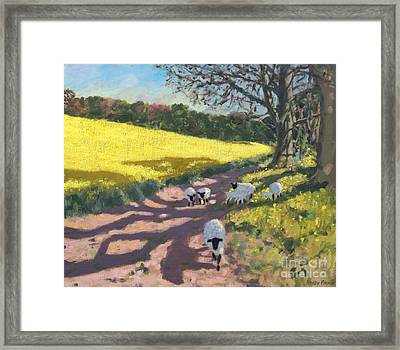 Sheep And Yellow Field Framed Print