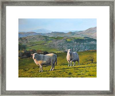 Framed Print featuring the painting Sheep At Rhug by Harry Robertson