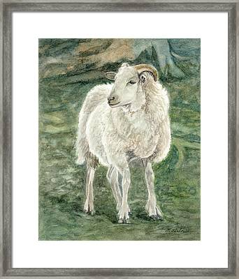 Sheep At The Farm Framed Print