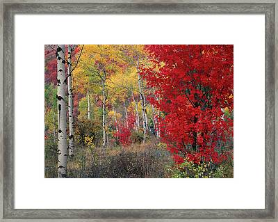 Sheep Canyon In Autumn Framed Print by Leland D Howard