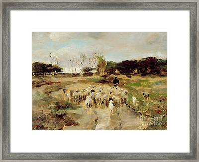 Sheep Flock Framed Print by Anton Mauve
