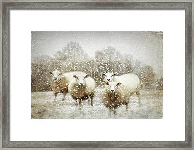 Framed Print featuring the photograph Sheep Gathering In Snow by Bellesouth Studio