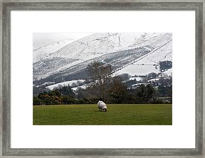 Sheep Grazing Atthe Galtees  Ireland's Tallest Inland Mountains Framed Print by Pierre Leclerc Photography