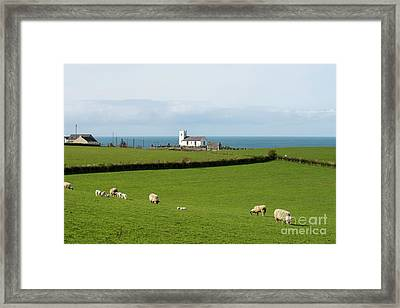 Framed Print featuring the photograph Sheep Grazing On Irish Coastline by Juli Scalzi