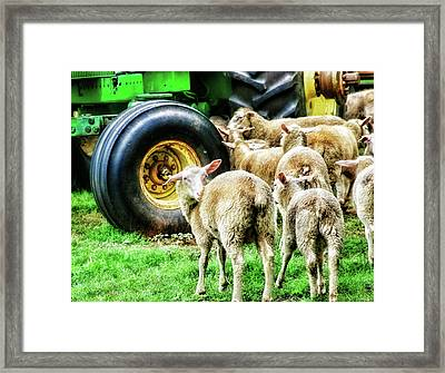 Framed Print featuring the photograph Sheep Guards by Toni Hopper