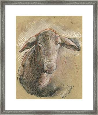 Sheep Head Framed Print