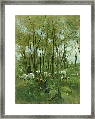 Sheep Herd In A Forest Framed Print by Anton Mauve