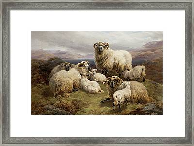 Sheep In A Highland Landscape Framed Print by William Watson