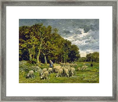 Sheep In A Pasture Framed Print by MotionAge Designs