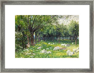 Sheep In An Orchard At Springtime Framed Print