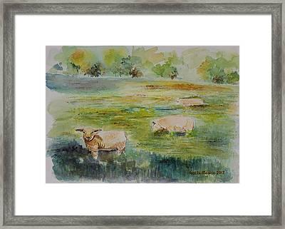 Sheep In Pasture Framed Print by Geeta Biswas