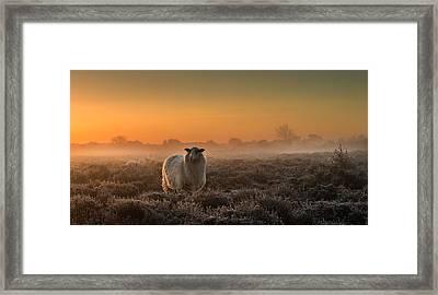 Sheep In The Mist Framed Print by Rijko Ebens