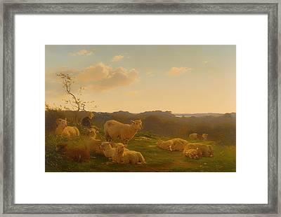Sheep On A Hill Near Skarridso Framed Print