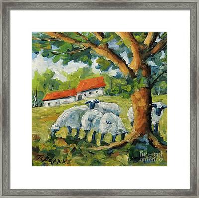 Sheep On The Farm Framed Print by Richard T Pranke