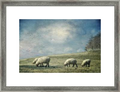 Sheep On The Hill Framed Print by Kathy Jennings