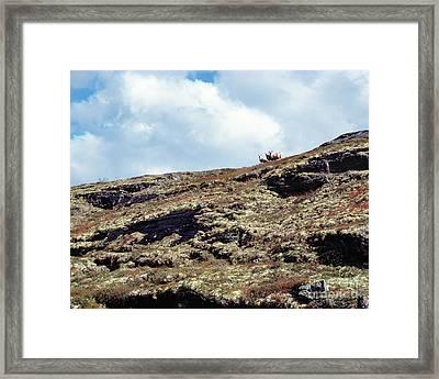 Sheep On The Mountain Ridge Framed Print by Kim Lessel