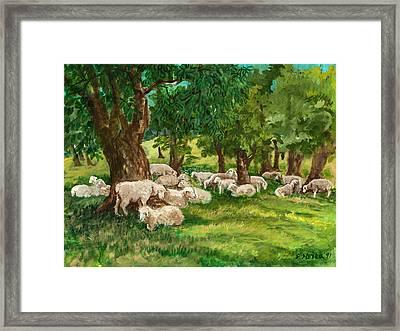 Sheep Pasture Ithaca New York Framed Print by Ethel Vrana