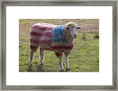 Sheep With American Flag Framed Print by Garry Gay