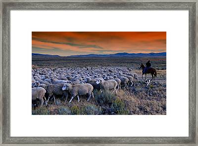 Sheepherder Life Framed Print by Movie Poster Prints