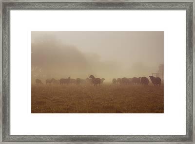 Sheeps In The Mist Framed Print by Chris Fletcher