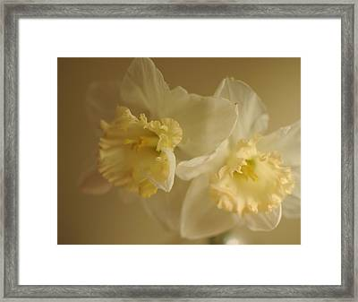 Sheer Daffodils Framed Print by Beverly Cazzell