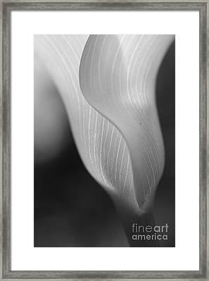 Sheer Elegance Framed Print by Beth Buelow