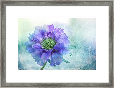 Sheer Lilac Framed Print
