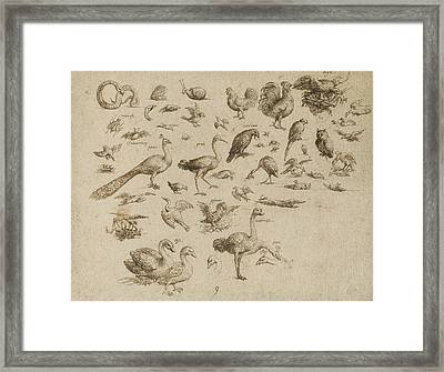 Sheet Of Studies Of Birds And Animals Framed Print by Celestial Images