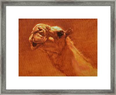Sheikh Jamel Framed Print
