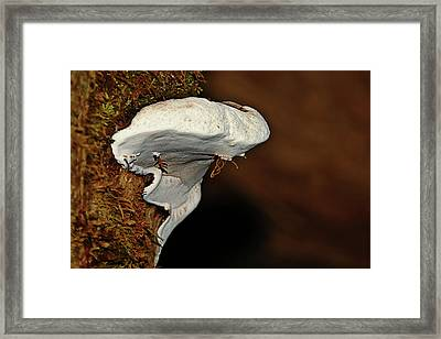 Shelf Fungus On Bark - Quinault Temperate Rain Forest - Olympic Peninsula Wa Framed Print by Christine Till