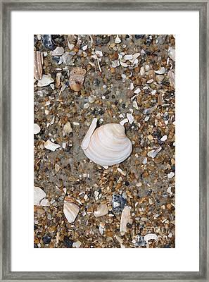 Shell 1 Framed Print by Marcie Daniels