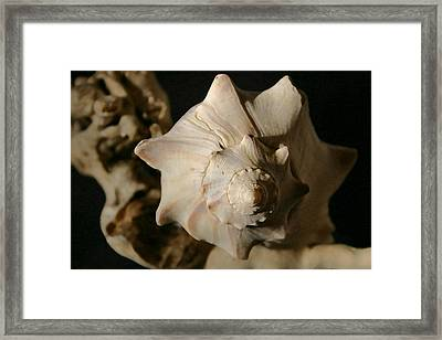 Shell And Driftwood Framed Print by Mary Haber