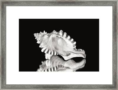 Shell And Reflection Framed Print by Bill Brennan - Printscapes