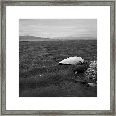 Shell And Sand Framed Print
