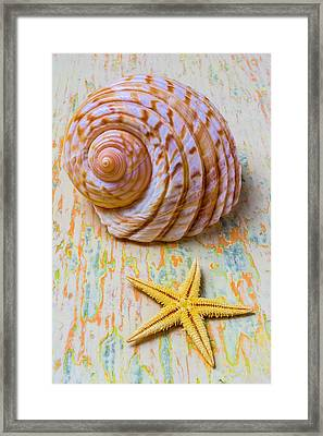 Shell And Starfish Framed Print by Garry Gay