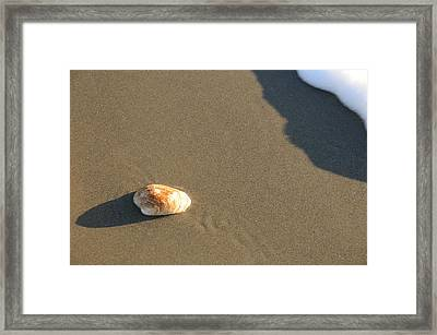 Shell And Waves Part 2 Framed Print by Alasdair Turner