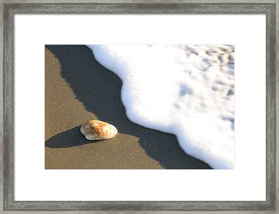 Shell And Waves Part 3 Framed Print by Alasdair Turner