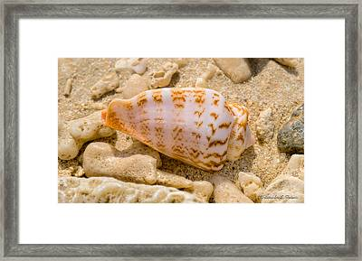 Shell Framed Print by Christopher Holmes