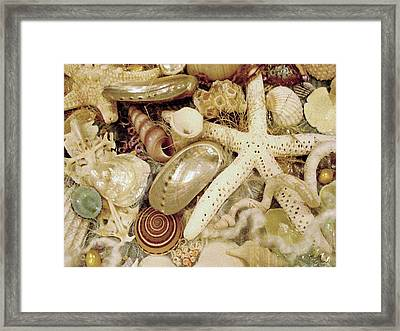 Framed Print featuring the photograph Shell Collection by Rosalie Scanlon
