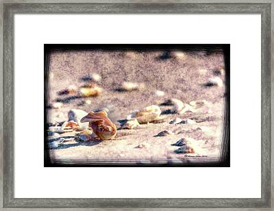 Shell Delight Framed Print by Marvin Spates