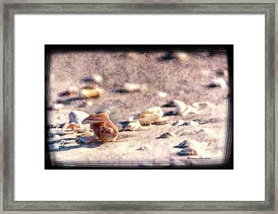 Shell Delight Framed Print