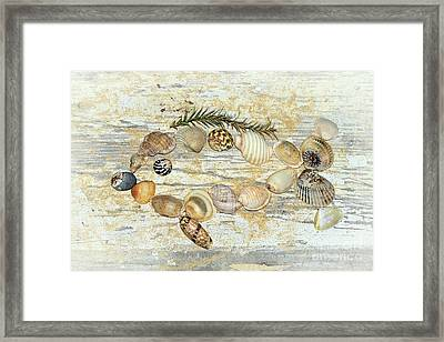 Shell Fish By Kaye Menner Framed Print
