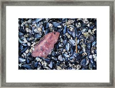 Shell Fish Framed Print by Mary Lee Dereske