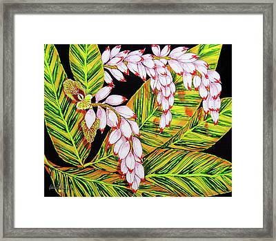 Shell Ginger Flowers Framed Print