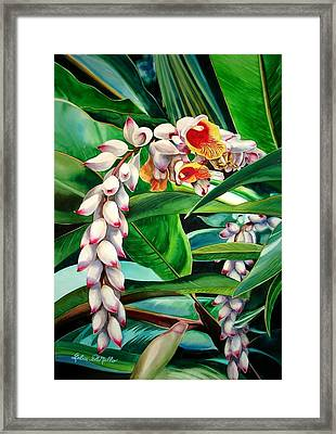 Shell Ginger Framed Print